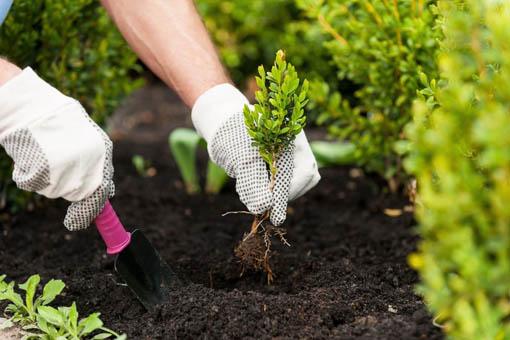 Пересадка садовых растений