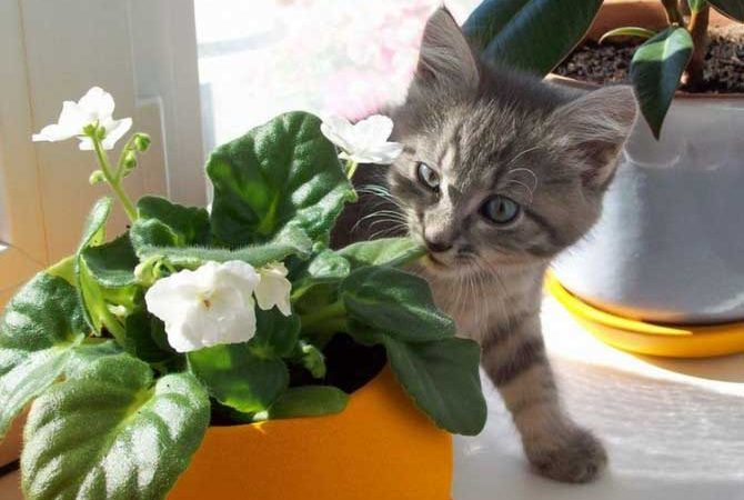 Как оградить комнатное растение от кошки