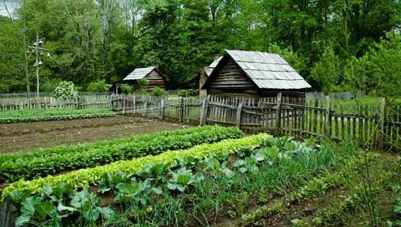 8 советов, как обустроить свой огород с умом